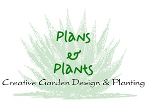 Plans and Plants